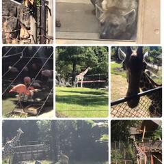 日本一の動物園/おでかけ 10月某日高知の のいち動物公園と龍河洞…(3枚目)