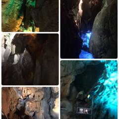 日本一の動物園/おでかけ 10月某日高知の のいち動物公園と龍河洞…(9枚目)