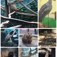日本一の動物園/おでかけ 10月某日高知の のいち動物公園と龍河洞…(4枚目)