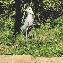 日本一の動物園/おでかけ 10月某日高知の のいち動物公園と龍河洞…