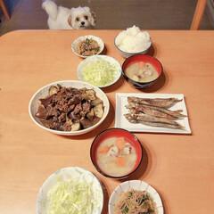 ミックス犬/マルキャバ/晩ご飯 今日の晩ご飯は何ですか?