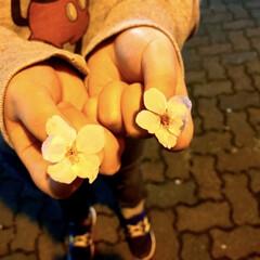 春は来る/豊郷台/宇都宮市/雪にも負けず/夜桜/サクラ 夜、スーパーへ朝食用のパンを買いに。。。…