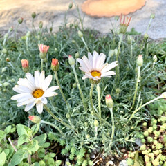 stay home/紫陽花/モッコウバラ/庭の植物/青空/おうち時間/... 今日は朝から晴天… 久々に庭に出てみたら…
