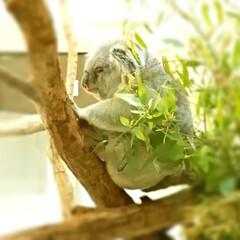 多摩動物公園/動物園/平成最後/春のフォト投稿キャンペーン/ありがとう平成/GW/... わが家のGW…10連休は次男だけで、私も…(5枚目)