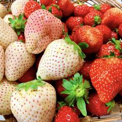 おうち時間/いちご/おやつ じいじ&ばあばから、イチゴが届きましたぁ…