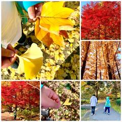 お散歩/銀杏/紅葉/公園 土曜日、近くの公園へ。 ハートの銀杏を発…