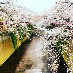 目黒川/桜/風景 しばらく間が空いてしまいました…💦 目黒…