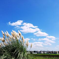 パンパスグラス/秋 空が高いですね😉🎵