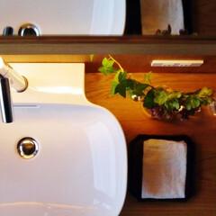 洗面所/リフォーム/風景のある家
