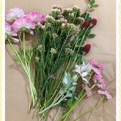 ラナンキュラス/スターチス/ライスフラワー/ストロベリーキャンドル/フランネルフラワー/デイジー/... 庭で切り取ったお花達💐 ドライフラワーに…