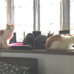 猫 揃って外を見てる姿が 可愛くて  出勤前…