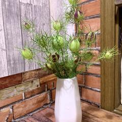 お花大好き/お花のある暮らし/ガーデニング/ニゲラの実/アナベル アナベルが豪雨に耐えられず枝が折れてしま…(2枚目)