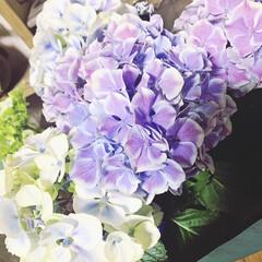 母の日プレゼント/コーヒーミル/紫陽花 母の日プレゼント🎁 私が母にあげた物 紫…(1枚目)
