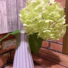 お花大好き/お花のある暮らし/ガーデニング/ニゲラの実/アナベル アナベルが豪雨に耐えられず枝が折れてしま…(1枚目)