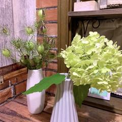 お花大好き/お花のある暮らし/ガーデニング/ニゲラの実/アナベル アナベルが豪雨に耐えられず枝が折れてしま…(3枚目)