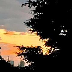 夕焼け/夕暮れ/空/ベランダからの 夕暮れ 台風の後の ベランダから 見える 夕暮れ (3枚目)