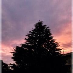 窓からの眺め/街路樹/カンナ/花/夕焼け/空/... 2、3  日  前の 夕焼け 暗くなる前…