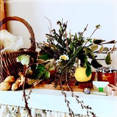 ハンドメイド/キャンドゥ 朝ごはん 赤米と枝豆おにぎり 焼魚(ホッ…(3枚目)