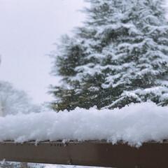 雪だるま/雪 雪〜〜❄️👀 窓を 開けて ビックリ!!…