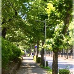翠の癒し空間/夕暮れの 空 PM 19:00 の空 リビングからの …(2枚目)