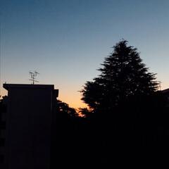 夕焼け/空 やっと リビングから 空が綺麗に 見える…
