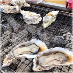 お出かけ/牡蠣小屋/フード/グルメ/おでかけ 牡蠣小屋に 行ってきました 美味しかった…