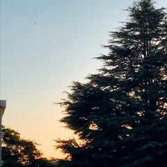 夕焼け/空 やっと リビングから 空が綺麗に 見える…(2枚目)