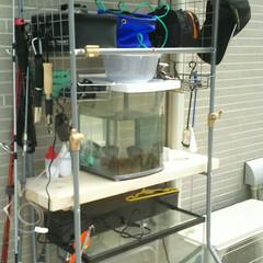 竿ラック/釣り/100均 洗濯機ラックはこっちに(笑) 主人の趣味…