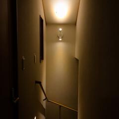 階段/IKEA/ライト/照明 イケアの小ぶりのスポットライトが家の階段…