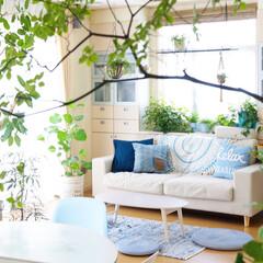 地中海/リビング/IKEA/ニトリ 大好きなブルーを取り入れて夏のリビング …