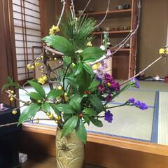 あけおめ/冬/お正月/抹茶 今日は親戚のお家でお食事会でした。お抹茶…