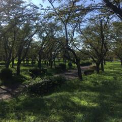 アウトドア/バーベキュー/LIMIAおでかけ部/わたしのごはん 今日は近くの公園でバーベキューをしました…(2枚目)