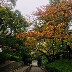 紅葉/おでかけ/秋 今日は一日中雨☔️でした 近くのお寺に紅…