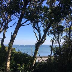 カフェ/ハロウィン/スイーツ/グルメ/おでかけ 癒しの空間 ゆっくり流れる時間、、海を眺…(8枚目)