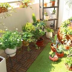ウッドパネル/観葉植物/IKEA/グリーン/DIY/雑貨/... マンションベランダのガーデニングスペース…