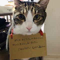 猫反省中/猫 最近寒くなったからかな? よく粗相をして…