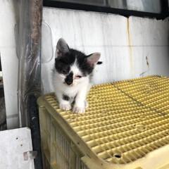 「近所の白黒子猫ちゃんがカラスに連れて行か…」(1枚目)