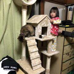 DIY/キャットタワー 実家の猫ジジの為にキャットタワー~♬.*…(1枚目)