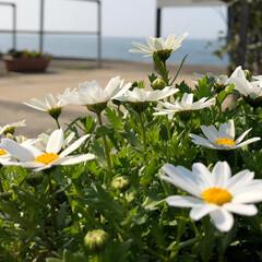 花/コメント大歓迎/おでかけ/風景/小さい春 春の花を見ると笑顔になります♪  小さい…