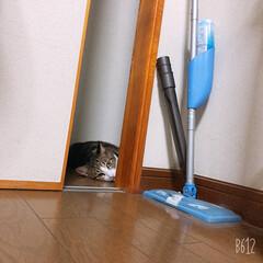 猫/コメント大歓迎/猫派/フォロー大歓迎/LIMIAペット同好会/にゃんこ同好会 どこからともなく視線を感じる……😅 見て…
