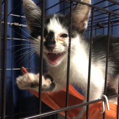 「近所の白黒子猫ちゃんがカラスに連れて行か…」(2枚目)