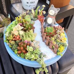 猫/転写シール/リメ鉢/可愛い/多肉/多肉寄せ植え/... 箱庭寄せ植え作りました😸❣️ お友達に🎁…
