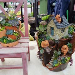 FlowerShop/多肉種 三重県一/ディスプレイ/松阪フラワーセンター/外観と内観にギャップのある店  松阪フラワーセンターさん 行く度、デ…