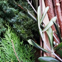 オオヤブシャブシ/名前/木の実  大晦日に拾ってた木の実ゎ📷1枚目~7枚…(9枚目)