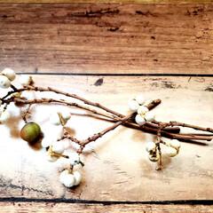 オオヤブシャブシ/名前/木の実  大晦日に拾ってた木の実ゎ📷1枚目~7枚…(6枚目)