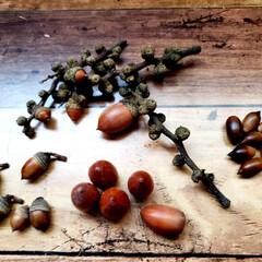 オオヤブシャブシ/名前/木の実  大晦日に拾ってた木の実ゎ📷1枚目~7枚…(3枚目)
