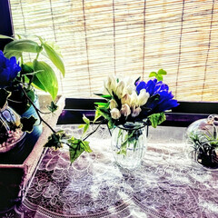 夏コーデ 花と緑で少しでも涼しさを🍃 夏のコーデ🌿