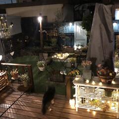 ガーデニング/人工芝/イルミネーションライト/ソーラーライト/ウッドデッキ/手作りのお庭/... 手作りのお庭のライトはソーラーライトばか…