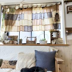カフェカーテン/出窓/チワワ/ソファ/インテリア/ペット チワワのコマです。 毎日クーラーのお部屋…