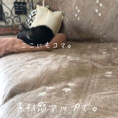 ソファーカバー/ペット/犬/インテリア/雑貨 チワワのコマたたずんでます☺️  ソファ…(2枚目)